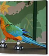 Parrot On Skates Canvas Print by Ruth Hallam