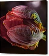 Parrot Tulip 4 Canvas Print