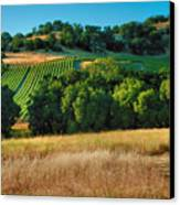 Paso Robles Vineyard Canvas Print by Steven Ainsworth