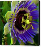 Passion-fruit Flower Canvas Print