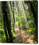 Path In Sunlit Forest Canvas Print by Elena Elisseeva