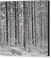 Peace In The Woods Canvas Print by Catherine Reusch  Daley