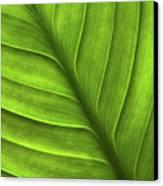 Peace Lily Leaf Canvas Print