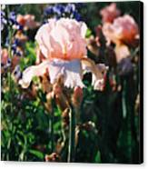 Peach Iris Canvas Print