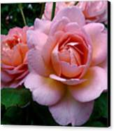 Peachy Pink Canvas Print