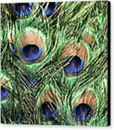 Peacock Feathers Canvas Print by John Foxx