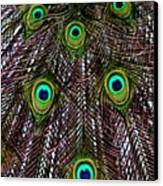 Peacock Feathers Upside Down Canvas Print