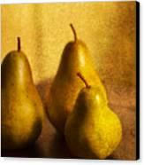 Pear Trio Canvas Print by Rebecca Cozart
