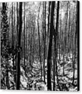 Pecos Wilderness Canvas Print