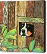 Peek-a-boo Fence Canvas Print