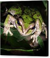 Peek A Boo Pacific Tree Frog Canvas Print
