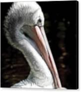 Pelican Dreams Canvas Print