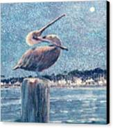 Pelikan At Night Santa Barbara Harbor Canvas Print
