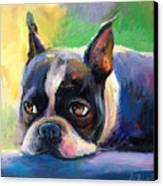 Pensive Boston Terrier Dog Painting Canvas Print