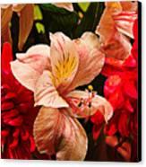 Peruvian Lily Grain Canvas Print