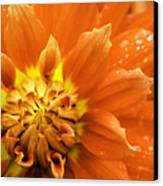 Petals Of Fire Canvas Print by Rod Sterling