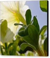 Petunia And Sunflare Canvas Print by Ray Laskowitz - Printscapes