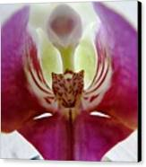 Phalaenopsis Orchid Detail Canvas Print