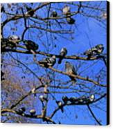 Pigeons Perching In A Tree Together Canvas Print