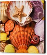 Pile Of Seashells Canvas Print