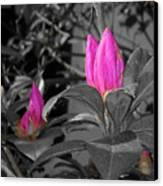 Pink-1 Canvas Print