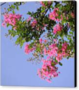 Pink And Blue Canopy Canvas Print