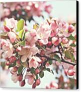Pink Apple Blossoms Canvas Print by Sandra Cunningham
