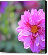 Pink Beauty Canvas Print by Becky Lodes
