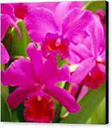 Pink Cattleya Orchids Canvas Print by Allan Seiden - Printscapes