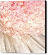 Pink Chrysanthemum With Antique Distress Canvas Print
