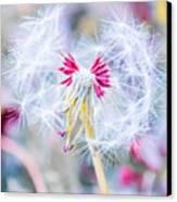 Pink Dandelion Canvas Print by Parker Cunningham