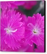 Pink Flower Closeup Canvas Print