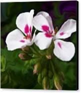 Pink Geranium Swirl Canvas Print