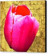 Pink Impression Tulip Canvas Print