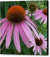 Pink In The Garden Canvas Print