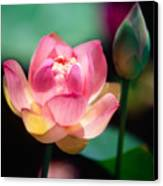 Pink Lotus Flower Canvas Print by George Oze