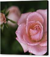 Pink Miniature Roses 3 Canvas Print by Roger Snyder