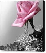 Pink Petals Canvas Print by Carlos Caetano