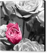 Pink Rose Canvas Print by Blink Images