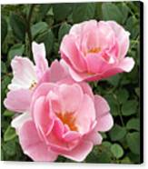 Pink Roses 1 Canvas Print