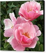 Pink Roses 2 Canvas Print