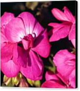 Pink Spring Florals Canvas Print