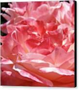Pink White Roses Floral Art Prints Rose Baslee Troutman Canvas Print
