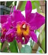 Pinkishyellow Orchid Canvas Print