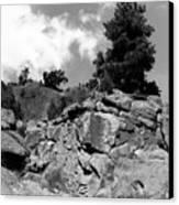 Pinnacle Pine Canvas Print