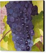 Pinot Noir Ready For Harvest Canvas Print by Mike Robles