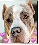 Pit Bull Dog - Pure Love Canvas Print