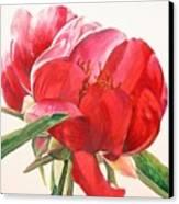 Pivoine 2 Canvas Print