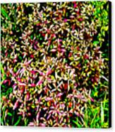 Plant Power 4 Canvas Print by Eikoni Images