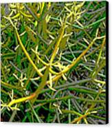 Plant Power 5 Canvas Print by Eikoni Images